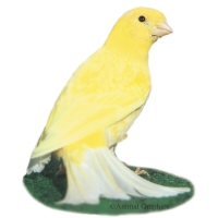 Friggen Canary