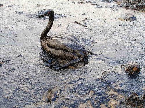 Poor Bird. :'(